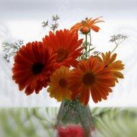 Их назвали-цветком солнца. :: Наталья Соколова