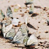 эффект бабочки :: Тася Тыжфотографиня