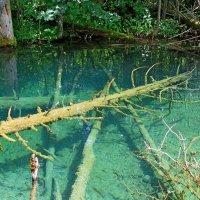 Затопленные деревья :: Ростислав