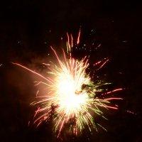 Огненный цветок :: Сибирский Кот