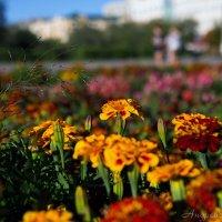 Городские цветы :: Андрей Розов