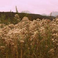 Пушистая горная поляна :: Анастасия Зубарева
