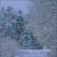 Зимнее утро :: Наталья Rosenwasser