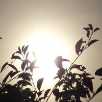 Солнце :: Артем Аленин