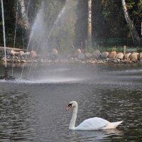 Пруд в парке :: Александр Матвеев