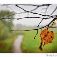 Налетела грусть... :: Валерий Шейкин