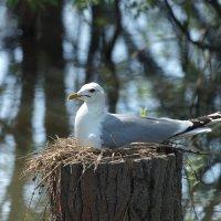 Птицы :: Андрей Зайцев