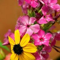 Цветы :: Katerina Taran