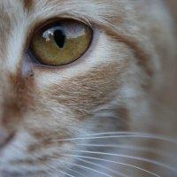 Кошка :: Banana Воеводина