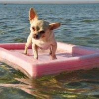 путешественница на плоту :: Oksana
