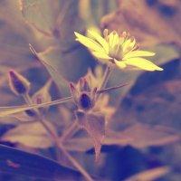 Природа :: Анастасия Переуда