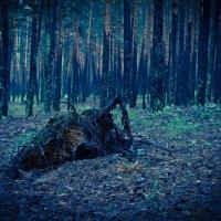 Заколдованный лес :: Андрей Зарубин