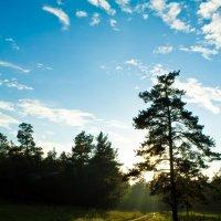 На закате :: Андрей Зарубин