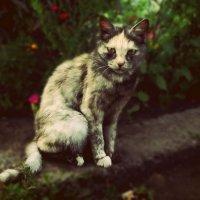 Кошка :: Диана Гилева
