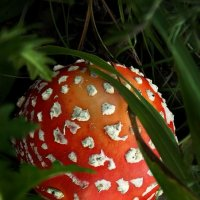 Лесной красавец :: Диана Гилева