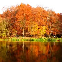 красавица осень :: Юлия Чолак