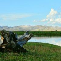 Шалости весеннего паводка :: юрий Амосов