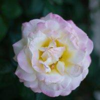Сказочные цветы :: Сергей Забияка
