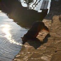 Солнечная дорожка :: Сибирский Кот