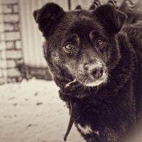 Мой пёс :: Vladimir Grinishin