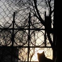 Cat :: Олеся Машанова