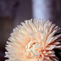Цветок :: Katerina Taran