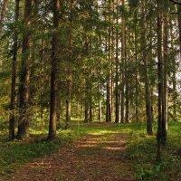 Лесная дорога. :: Юрий Шувалов