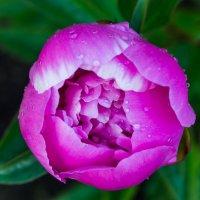 Цветок :: Buchhalter Иванов