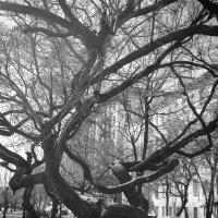 Дерево (что-то о стойкости) :: Татьяна [Sumtime]