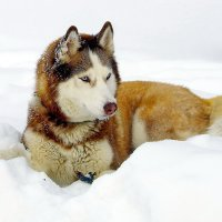 Добрый снег :: Владимир Каравашкин