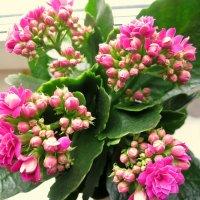 Цветы на подоконнике. :: Валентина Жукова