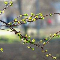 Едва весна... :: mAri