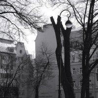 на солнечной стороне проспекта :: sv.kaschuk