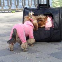 Живое собачье  зеркало... :: Алекс Аро Аро