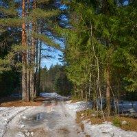 Весенними дорогами :: Алексей (GraAl)