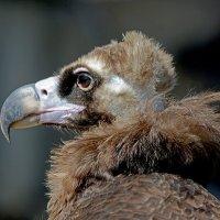 Орел в профиль :: Асылбек Айманов