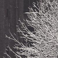 Темно-белое... :: Ирина Ден