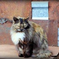 Апрельский котейка.. :: Александр Шимохин
