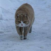 Возвращаясь с охоты... :: Vladimir Perminoff