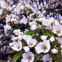 Прекрасные мгновения весны :: Алла ZALLA