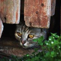 а вот и причина злости кота Сальво :: Роза Бара