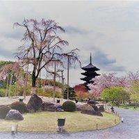 Плакучая сакура Xрама Tō-ji Киото :: Swetlana V