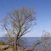 На берегу озера :: lady v.ekaterina