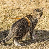 Кот учёный :: bajguz igor
