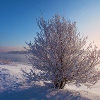 Мороз, иней и туман :: Анатолий Иргл