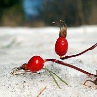 То, что птички зимой не доели.. :: Андрей Заломленков
