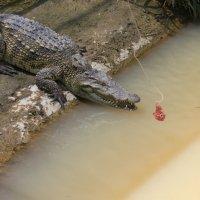 Крокодилова ферма :: Елена