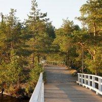 Мост на Остров Сулосаари. Любимое место горожан для прогулок :: Елена Павлова (Смолова)