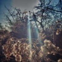 Прошлогодний цветок....весна :: Lilek Pogorelova