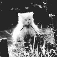 sunny cat :: kirill
